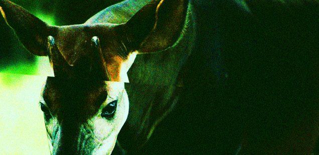 Näktergal #9: Backasvinet | Thet Liturgiske Owäsendet | Kompjotr Eplektrika