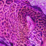 Näktergal#11: Piaget | Valvet | Max Wainwright